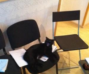 blog cat 1